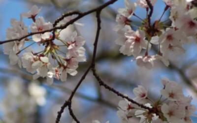 De invloed van wind op hoofdpijn‑, duizeligheidsklachten en hooikoorts